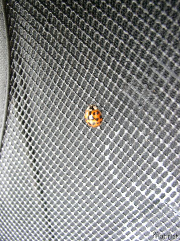 lady bug on my backpack