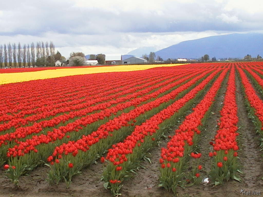 red and yellow field