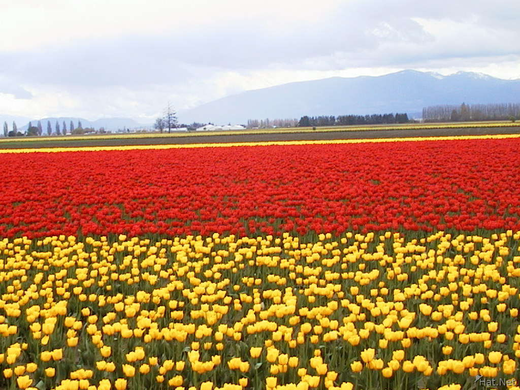 double red yellow field
