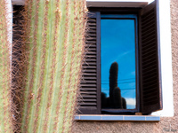 view--cactus windows Humahuaca, Jujuy and Salta Provinces, Argentina, South America