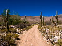 cactus road Humahuaca, Jujuy and Salta Provinces, Argentina, South America
