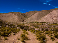 field of coctaca Humahuaca, Jujuy and Salta Provinces, Argentina, South America