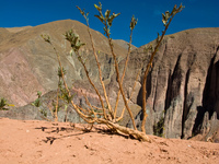 clinging to cliffside Tilcara, Iruya, Jujuy and Salta Provinces, Argentina, South America