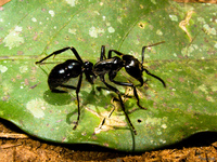 20091002123632_view--tiger_ant