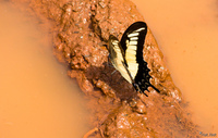 20091002132636_view--butterfly_river