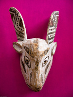 head of gazelle Salta, Jujuy and Salta Provinces, Argentina, South America