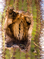 view--death of cactus Purmamarca, Tilcara, Jujuy and Salta Provinces, Argentina, South America