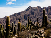 cactus mountain Purmamarca, Tilcara, Jujuy and Salta Provinces, Argentina, South America