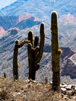 giving cactus Purmamarca, Tilcara, Jujuy and Salta Provinces, Argentina, South America