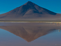 view--laguna colorada flamingos Laguna Colorado, Potosi Department, Bolivia, South America