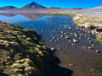view--same laguna colorada Laguna Colorado, Potosi Department, Bolivia, South America
