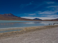 laguna honda Laguna Colorado, Potosi Department, Bolivia, South America
