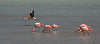 20091017094506_view--flying_flamingo