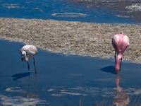 20091017100642_mother_and_baby_flamingo