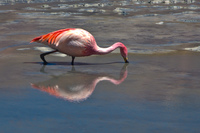 20091017101348_view--reflection_of_flamingo
