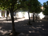 apple trees Sucre, Santa Cruz Department, Bolivia, South America