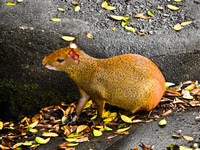 20091112142010_view--giant_rat_of_rio