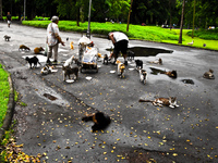20091112142100_feeding_homeless_cats