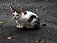 20091112142348_view--homeless_kitten_in_rio_de_jaeniro