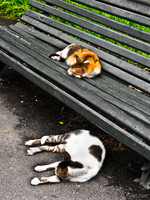20091112144314_view--two_sleepy_cat