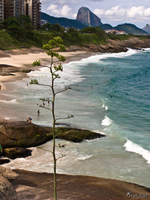 20091113162732_view--pine_of_ipanema