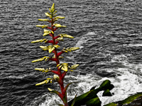 20091111161254_view--red_plant