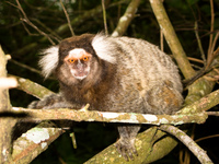 20091111165828_old_urca_monkey