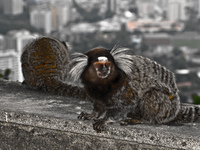 20091111174334_urca_monkeys
