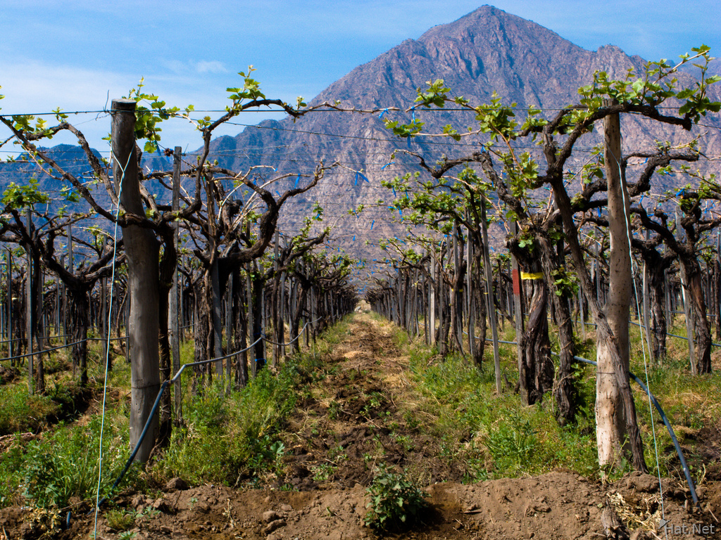 vineyard of cafayate