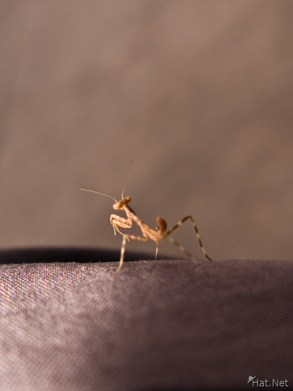 view--praying mantis