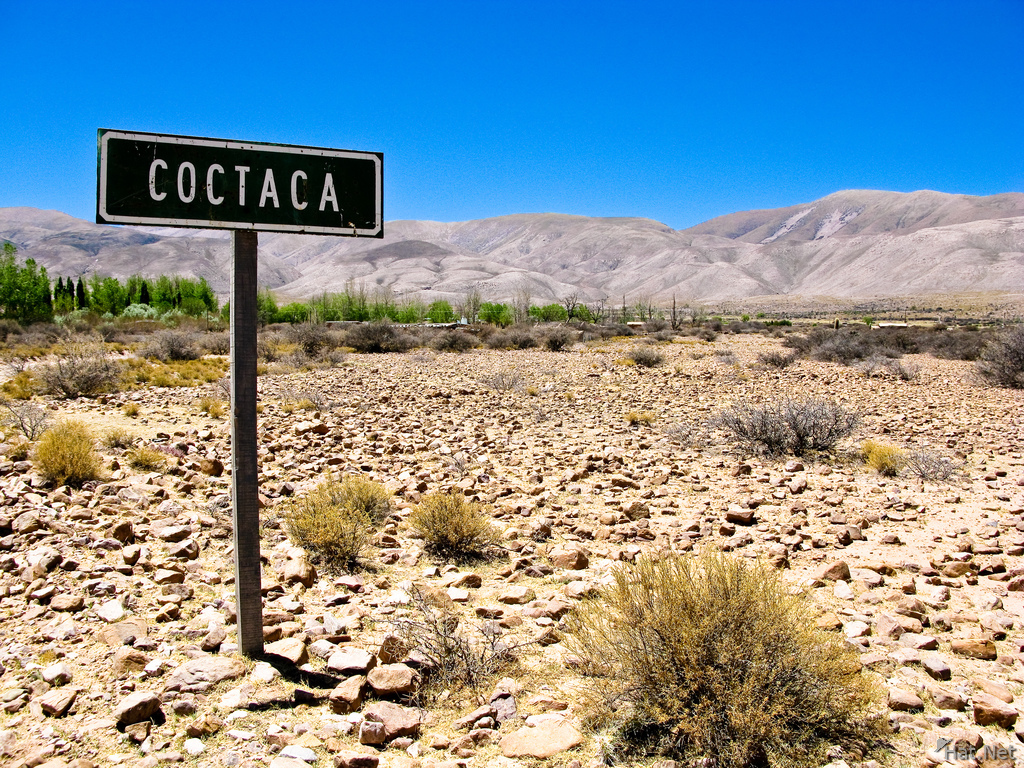 coctaca sign