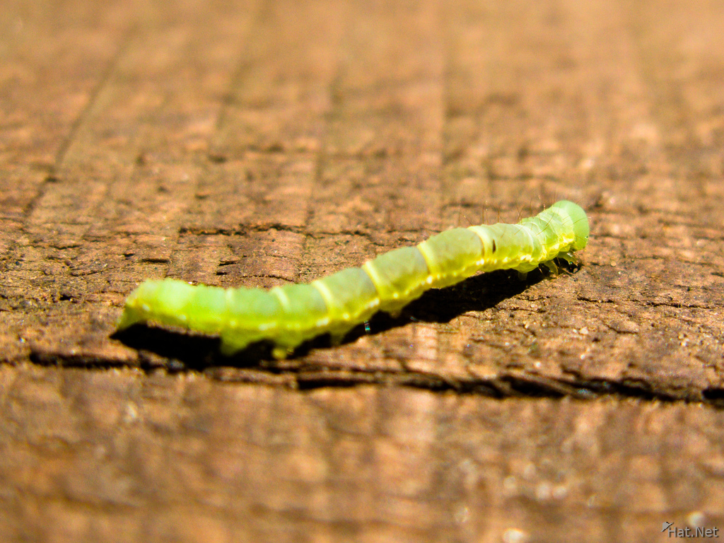 view--iguazu caterpillar