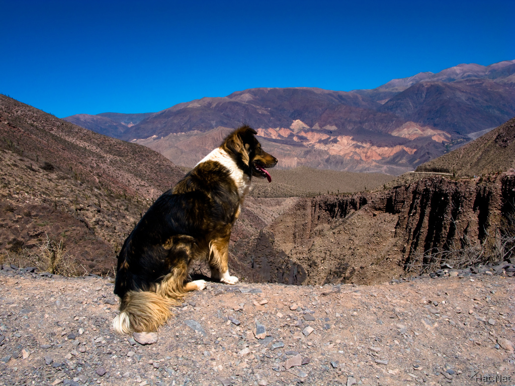 view--gps dog