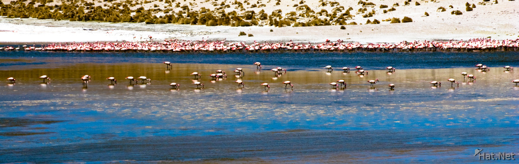 flamingos in laguna morejon