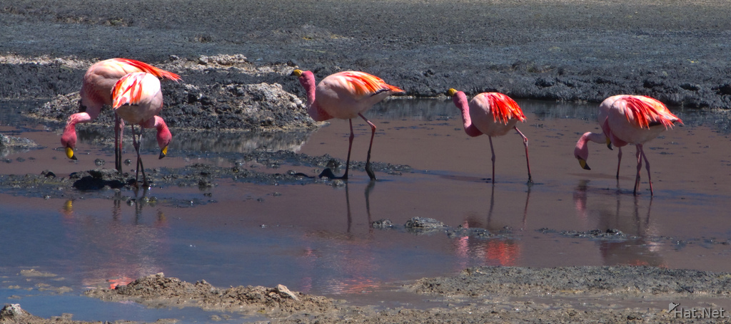view--flamingos