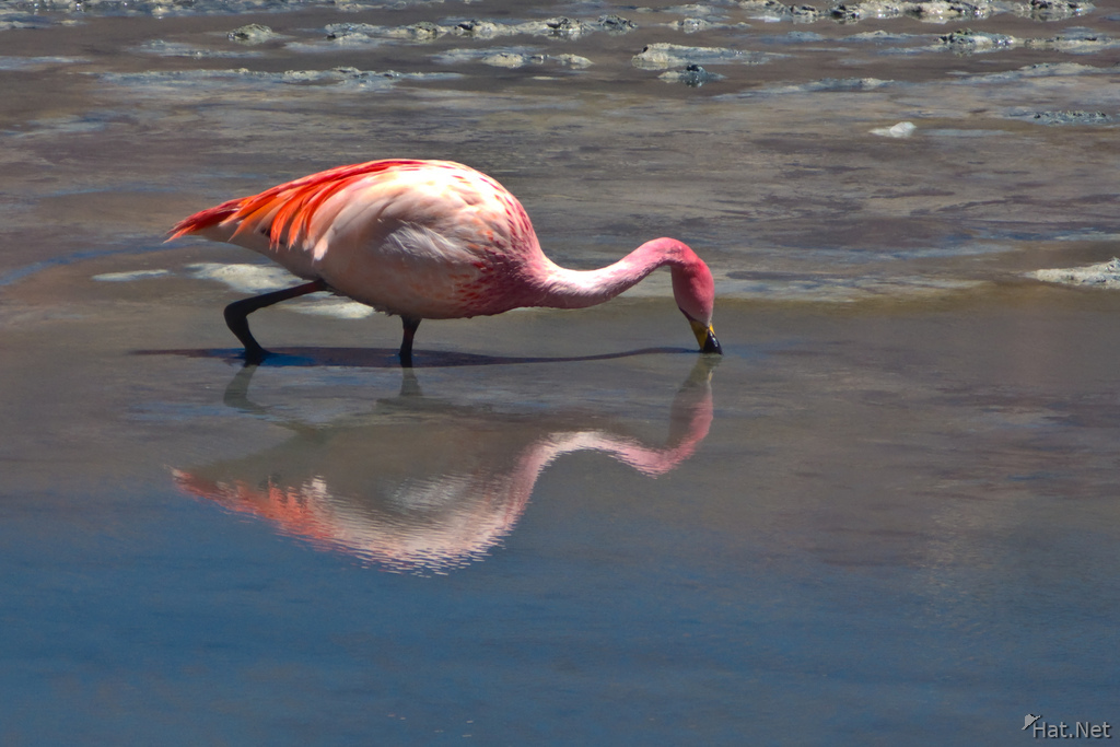 view--reflection of flamingo