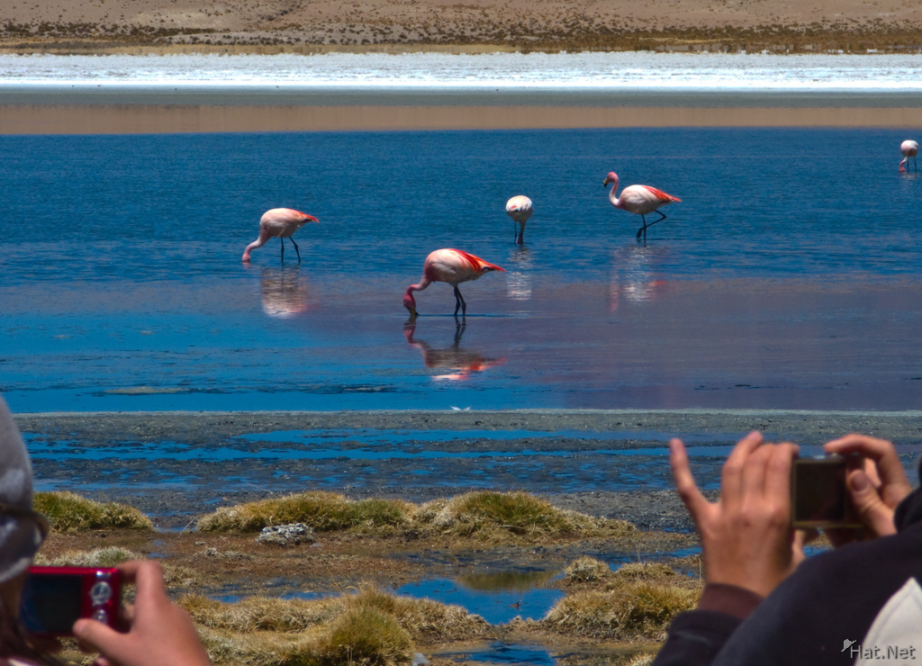 photographing flamingos