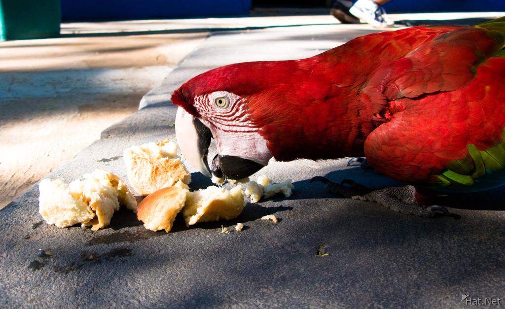 red mccraw eating bread
