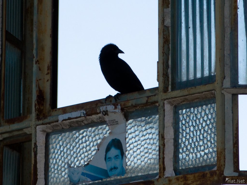 view--raven and politician