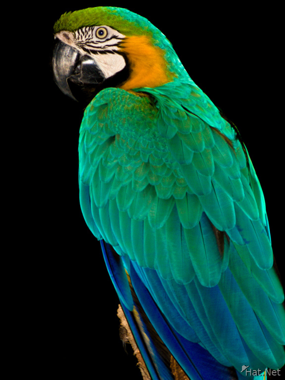 view--blue-and-yellow macaw