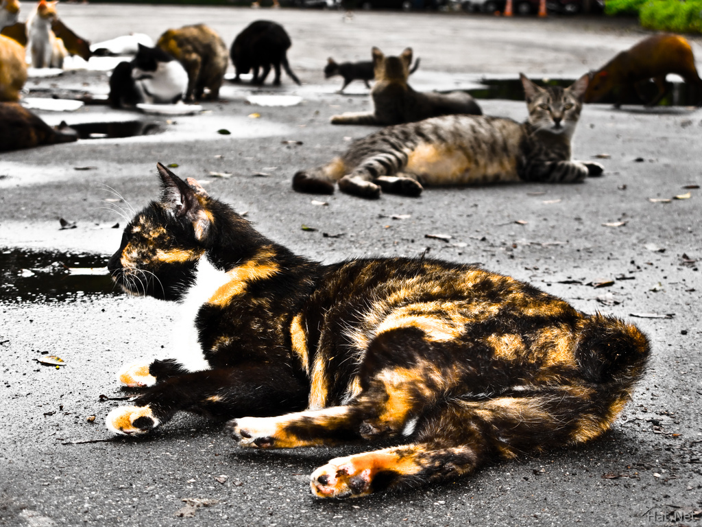 homeless cats of rio