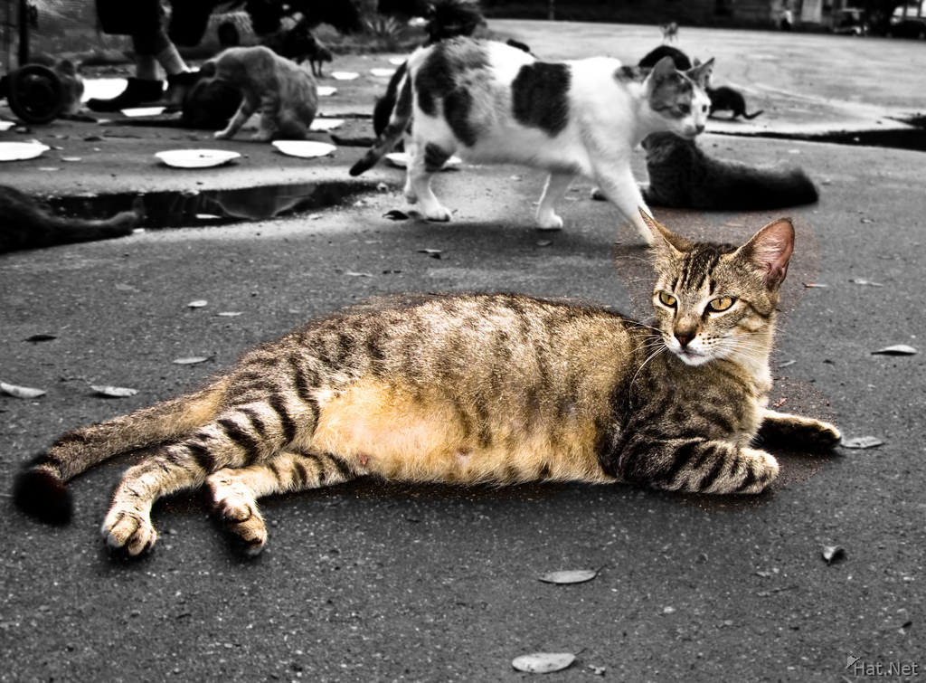 view--homelss cat of rio