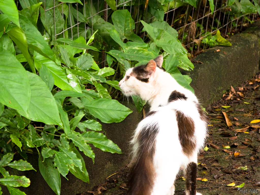 cat smelling leaves