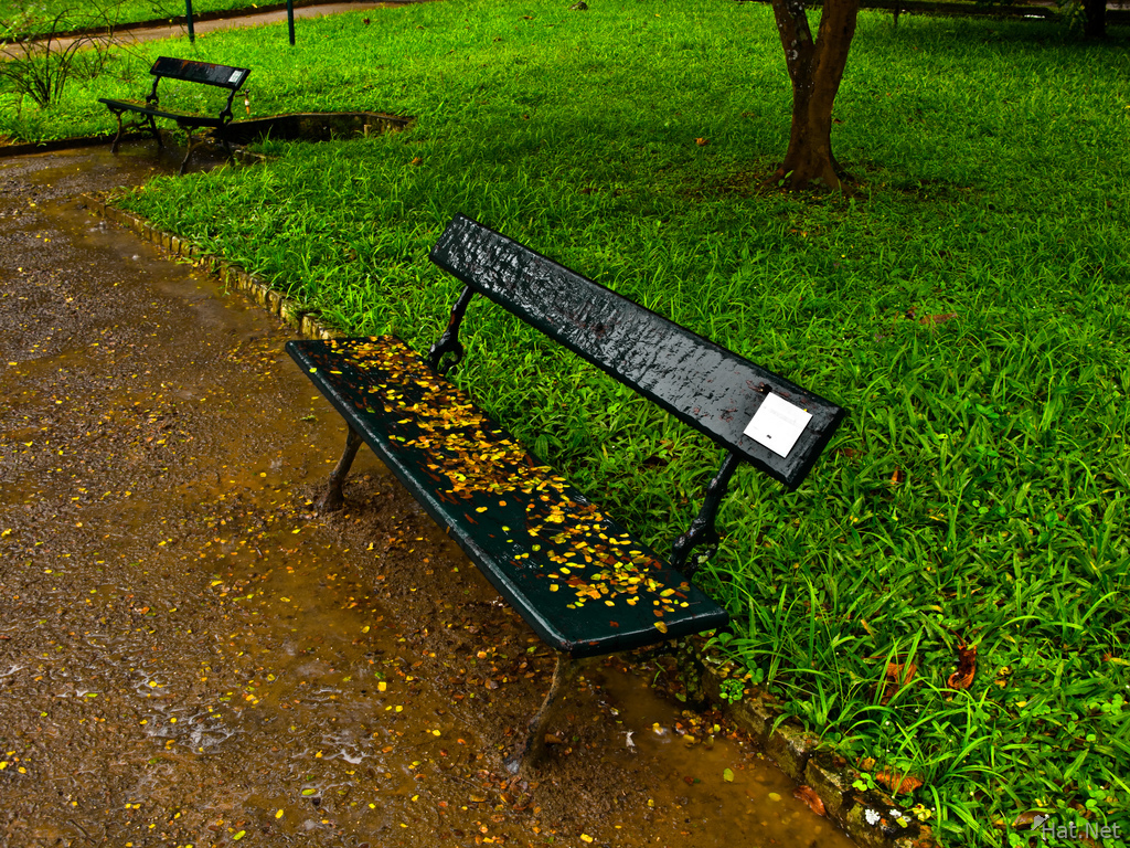 bench of autumn leaves