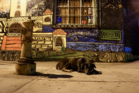 20151011210903_dog_and_the_city