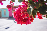 20151007155527_red_flowers
