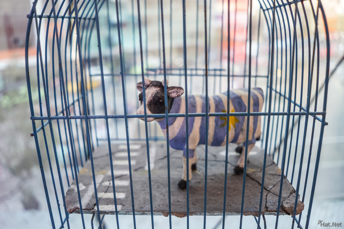 caged blue cow