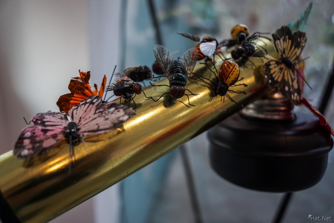 insect flute