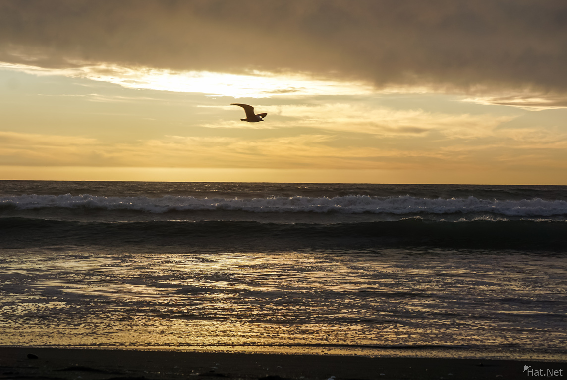 sunset seagull at La Serena