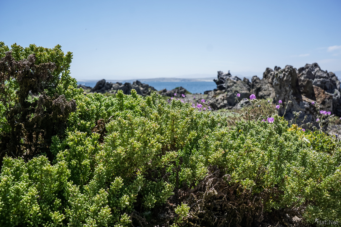 Blooming desert at Damas Island